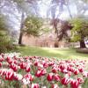 Tulpių metas