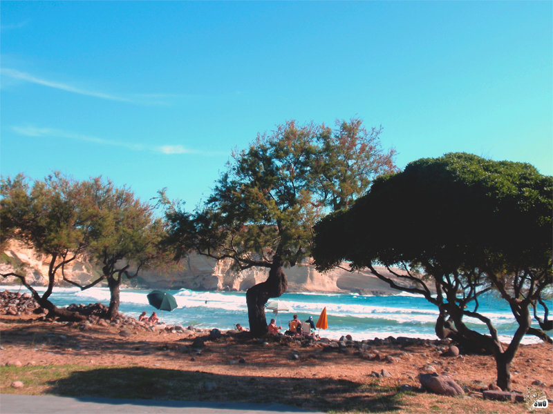 Part 2. Įprantu prie salos