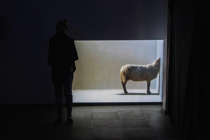 """Lauros Sabaliauskaitės video instaliacijų paroda """"Beerdvės"""""""
